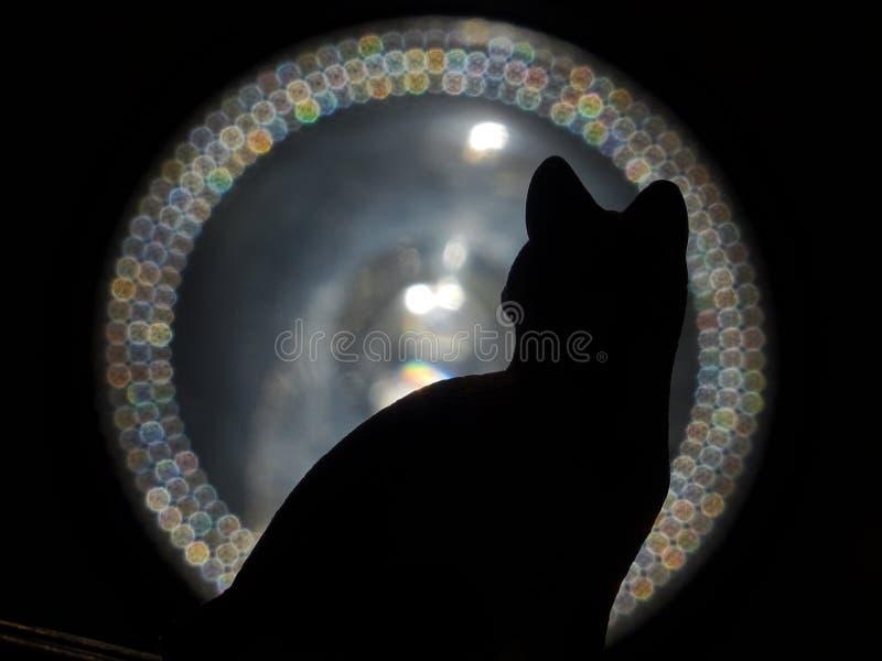 Кот и свет стоковая фотография