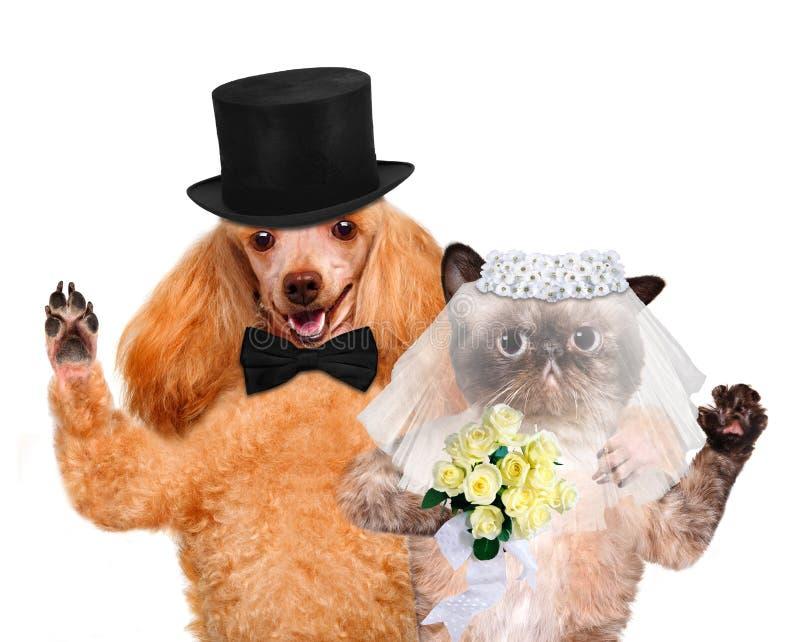 Кот и собака венчание стоковые изображения