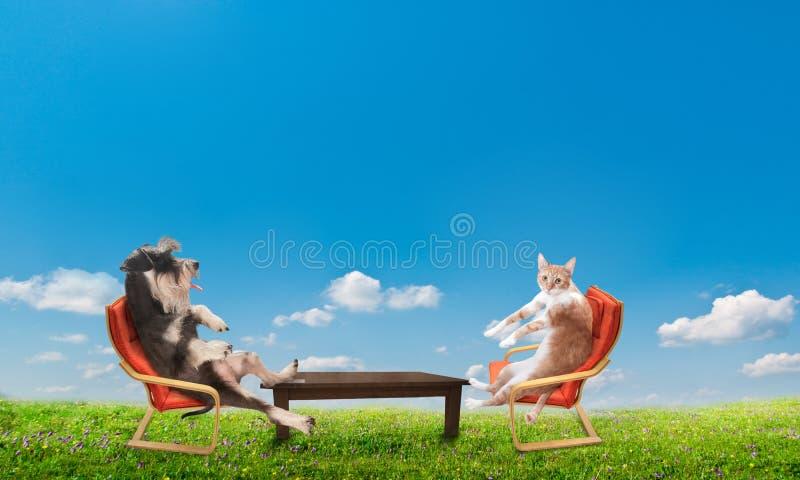 Кот и собака ослабляя стоковые фотографии rf