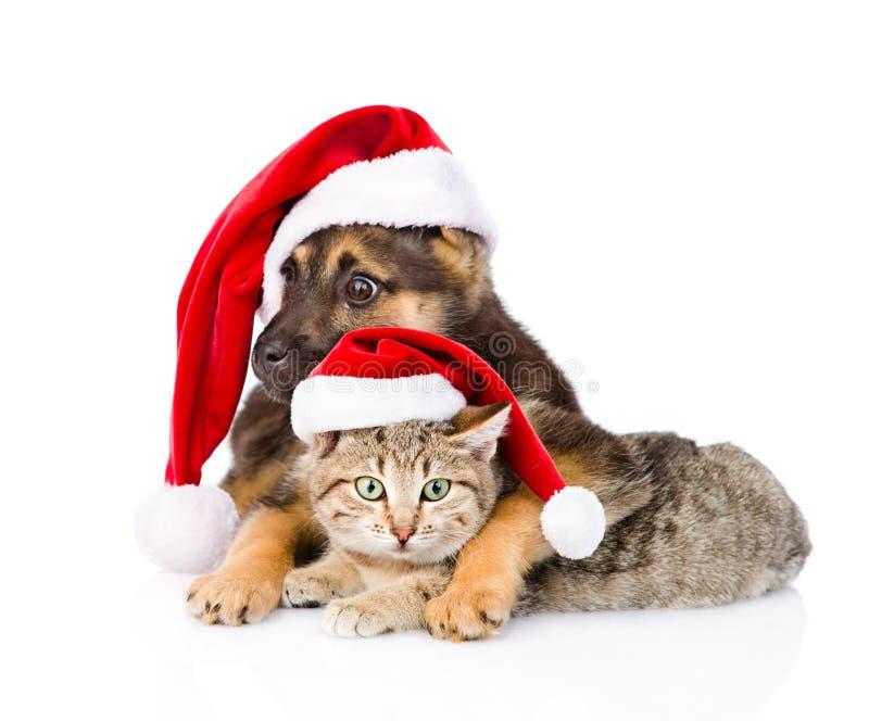 Кот и собака при шляпа Санта Клауса смотря камеру белизна изолированная предпосылкой стоковые фотографии rf