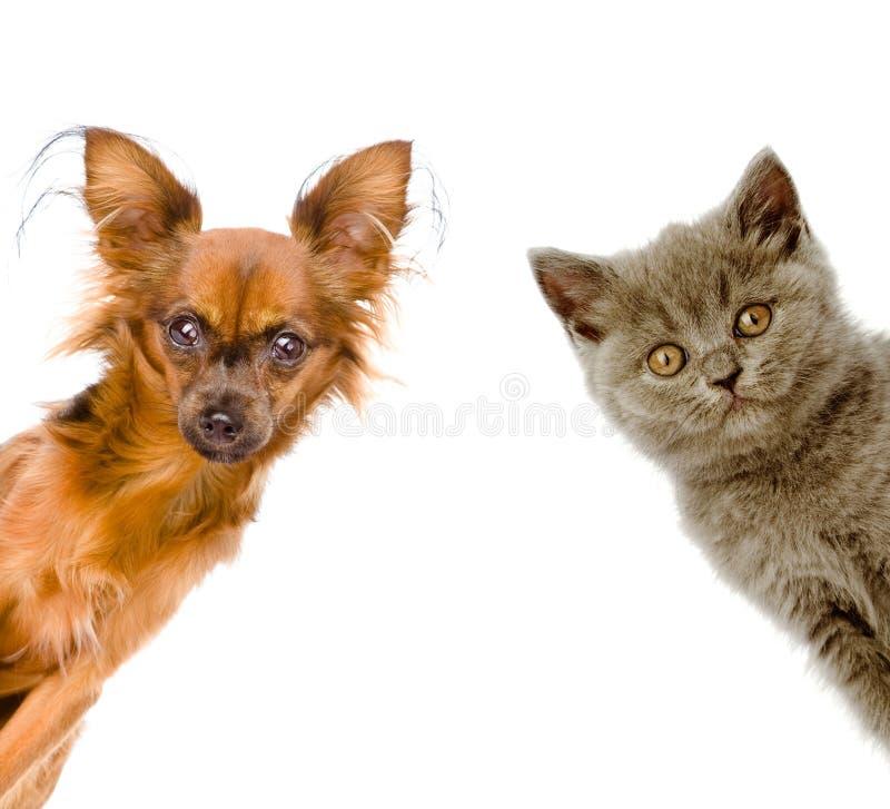 Кот и собака смотрят вне белизна изолированная ...