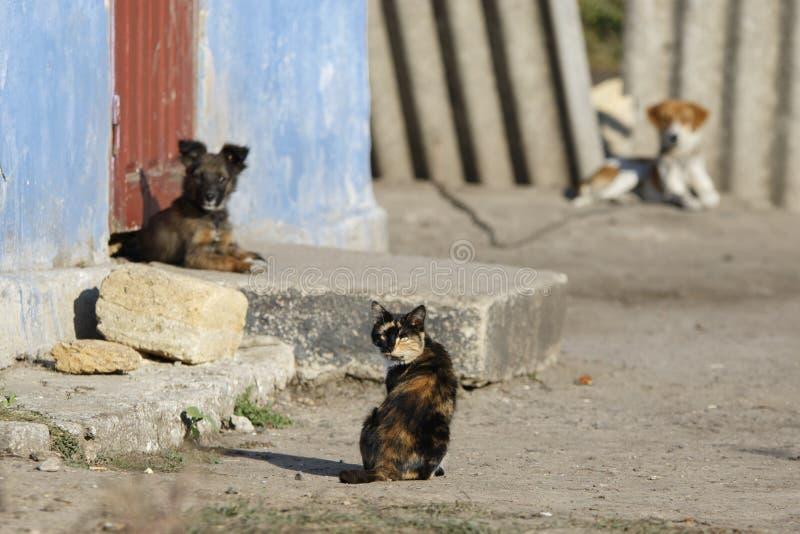 Кот и 2 собаки стоковое фото rf