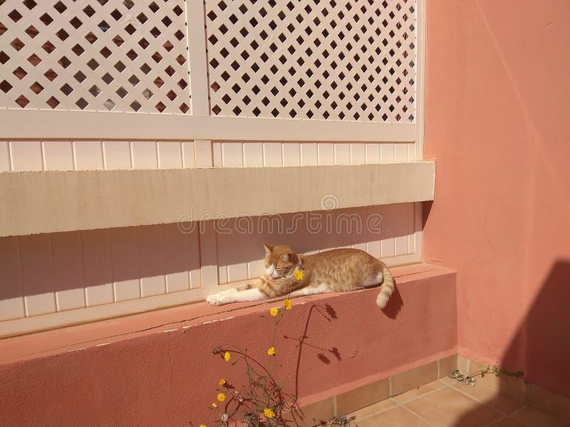 Кот и солнце стоковые изображения
