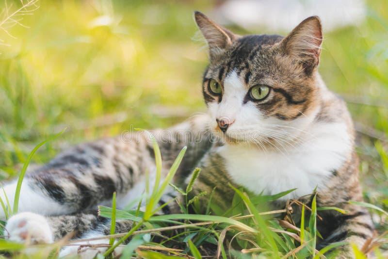 Кот и трава стоковые изображения