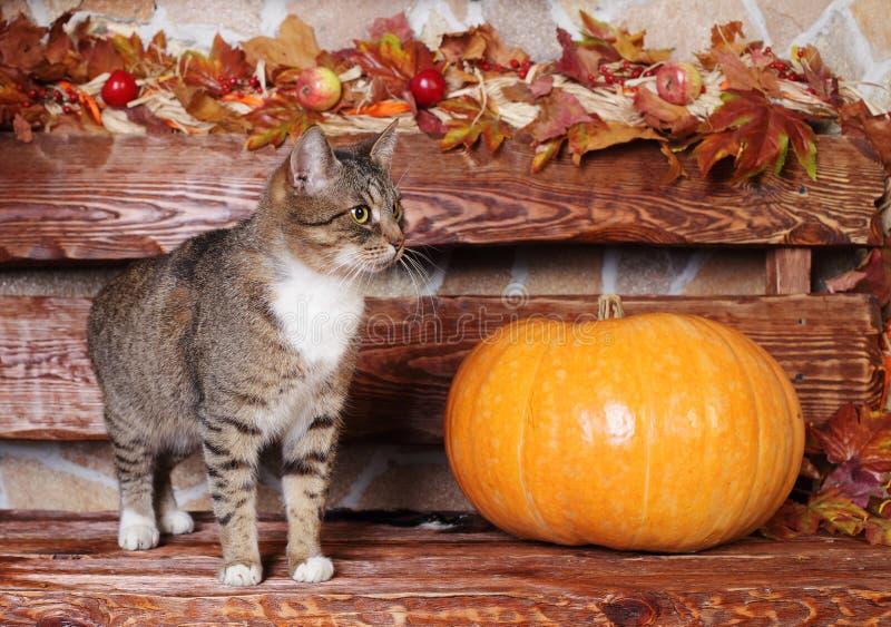 Кот и тыква, осень стоковые изображения rf