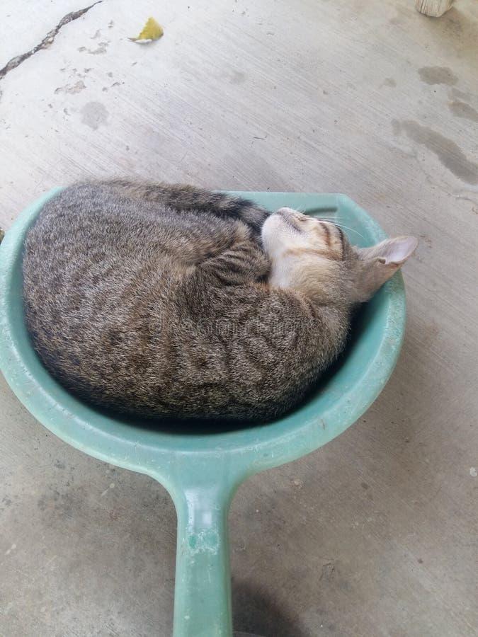 Кот киски в dustpan стоковое фото rf