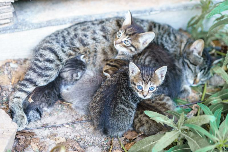 Кот кормит ее милые котят стоковое изображение rf