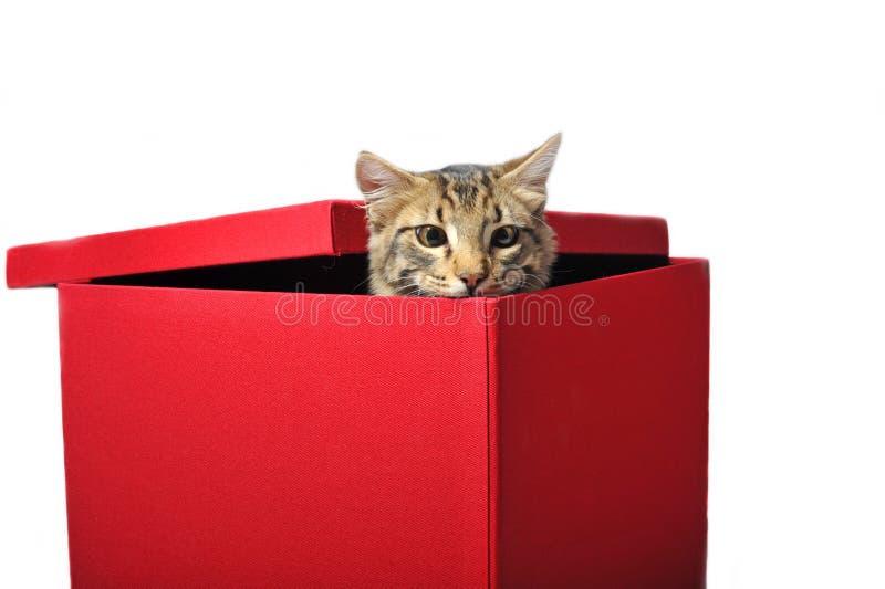 кот коробки стоковая фотография
