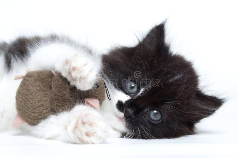 Кот котенка играя с мышью игрушки стоковая фотография rf