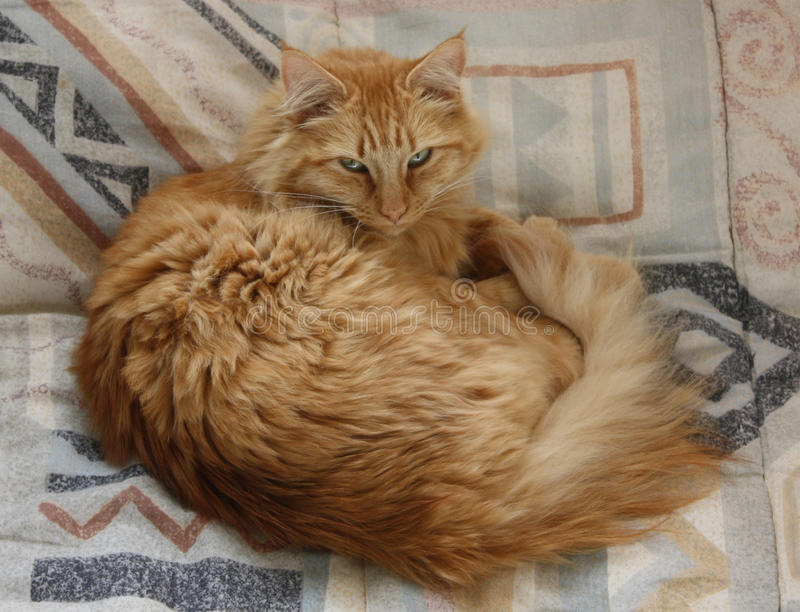 кот кровати стоковые изображения
