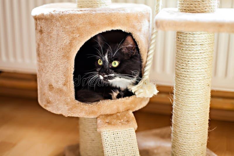 Кот кладя в коробку на царапая столб стоковые фото