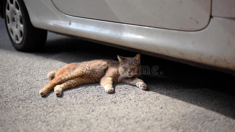 Кот кладя под пакостный автомобиль стоковые изображения rf
