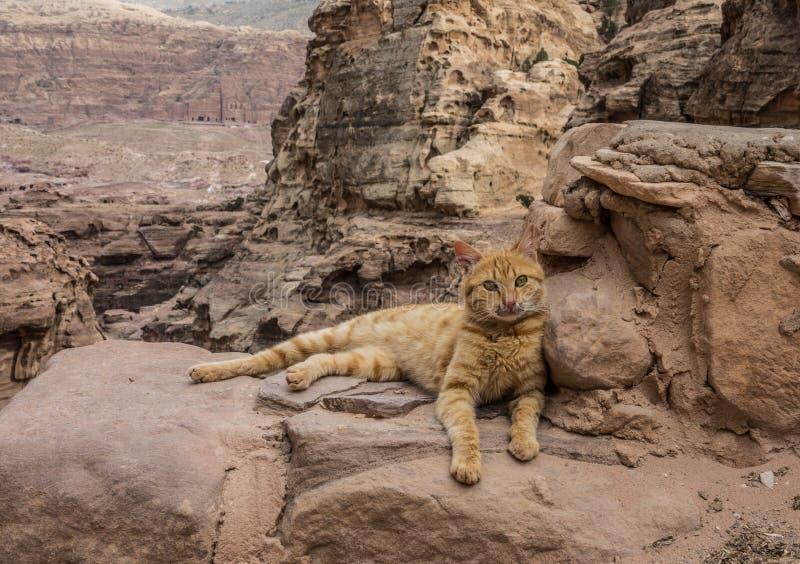 Кот лежа вниз в Petra стоковое изображение