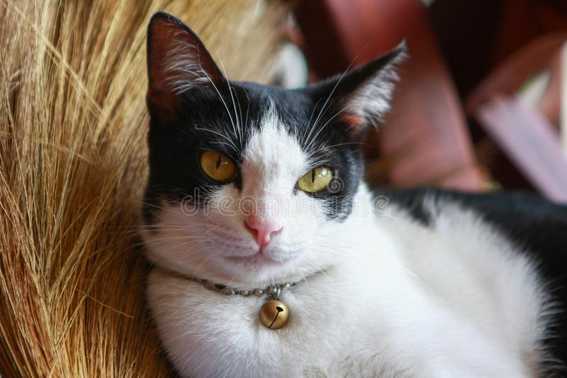 Кот лежа на венике стоковое изображение rf