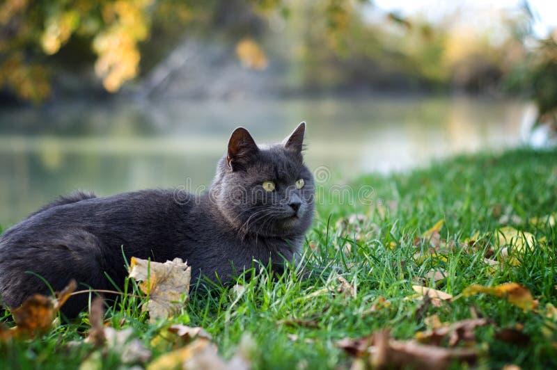 Кот лежа на зеленой траве стоковые фото