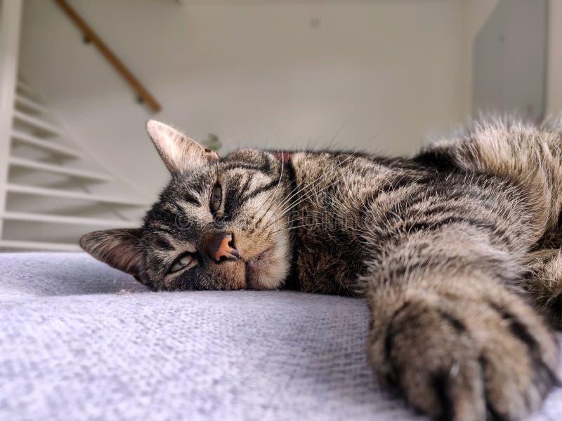 Кот лежа на кресле стоковые изображения rf