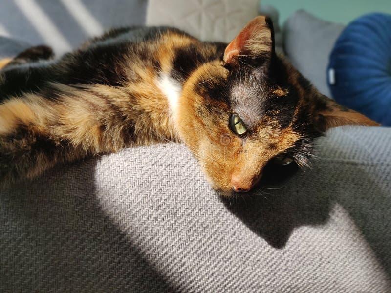 Кот лежа на кресле стоковые фотографии rf