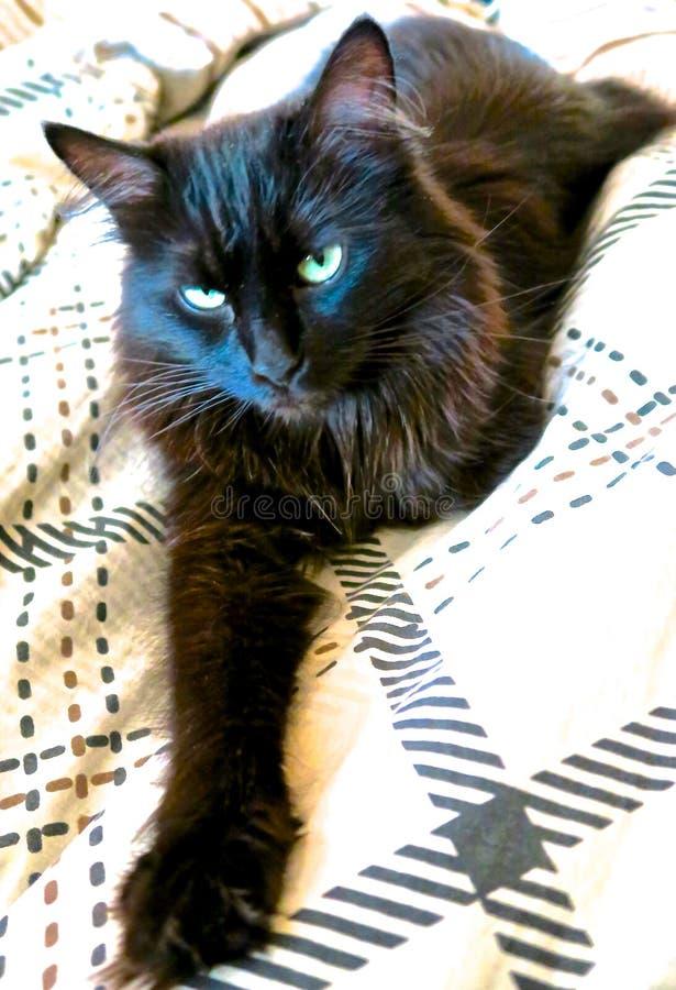 Кот лежа на кровати стоковое фото rf