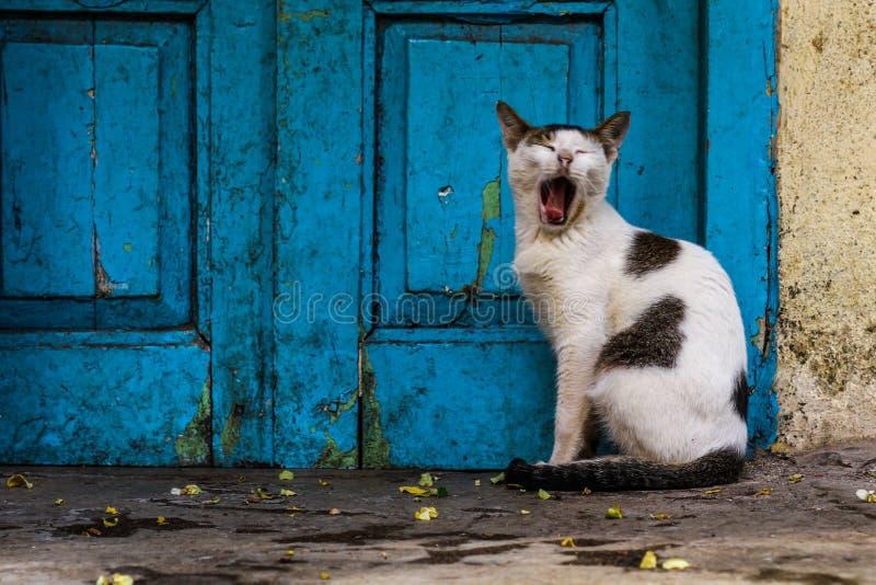 кот ленивый стоковые фотографии rf