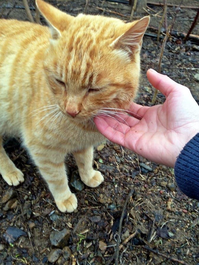 Кот любов стоковая фотография
