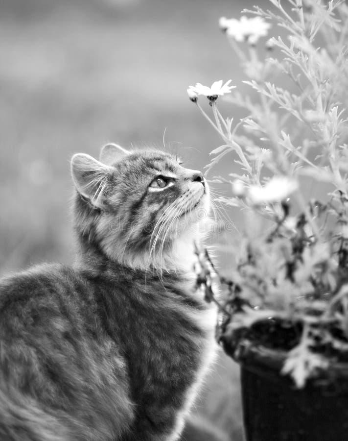 Download кот любознательний стоковое изображение. изображение насчитывающей посмотрите - 488019