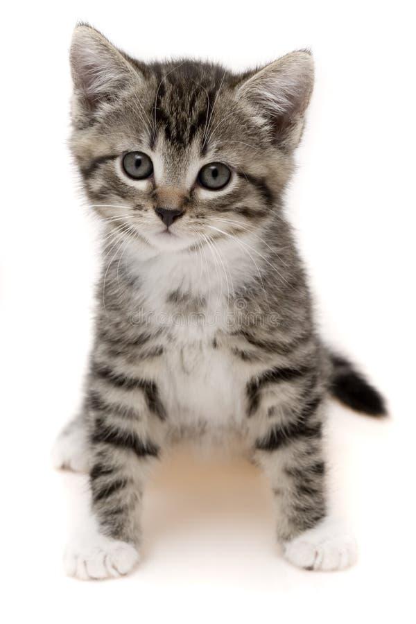 кот малый стоковые изображения