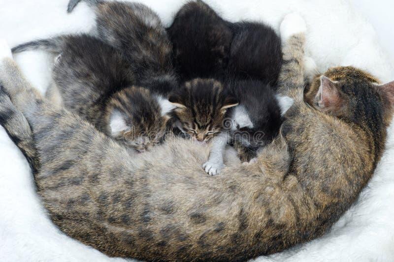 Кот мамы и кот младенца на белой предпосылке стоковое фото rf