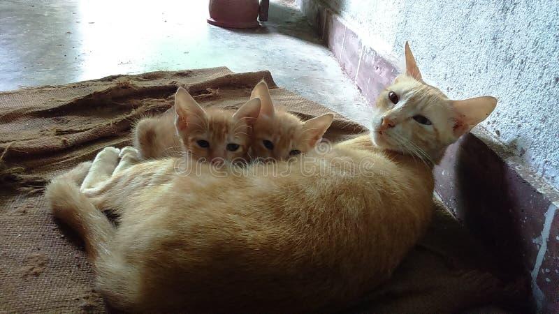 Кот матери и 2 котят стоковое фото rf