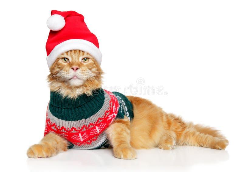 Кот Мейн-енота в одеждах Санта и красной шляпе стоковая фотография rf