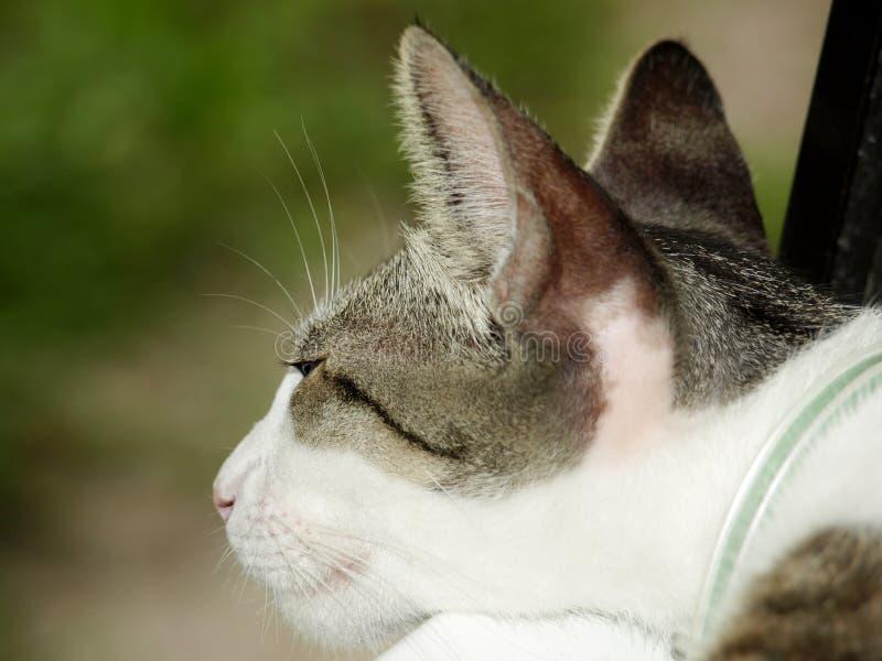 мечтательный кот фото