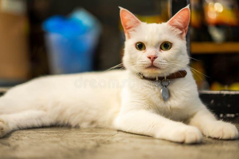 Кот миленький маленький рыжий котенок в пушистом питомце комфортабельно оседает лежит на столе счастливо в вечернее время стоковые фото