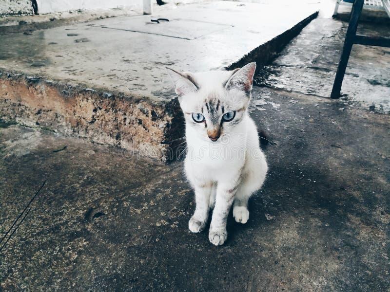 кот милый немногая стоковая фотография rf