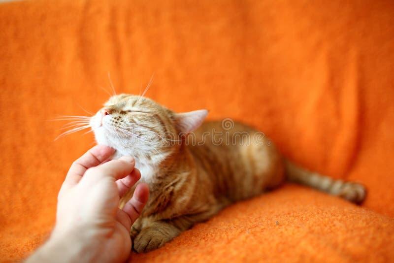 кот милый стоковые фотографии rf