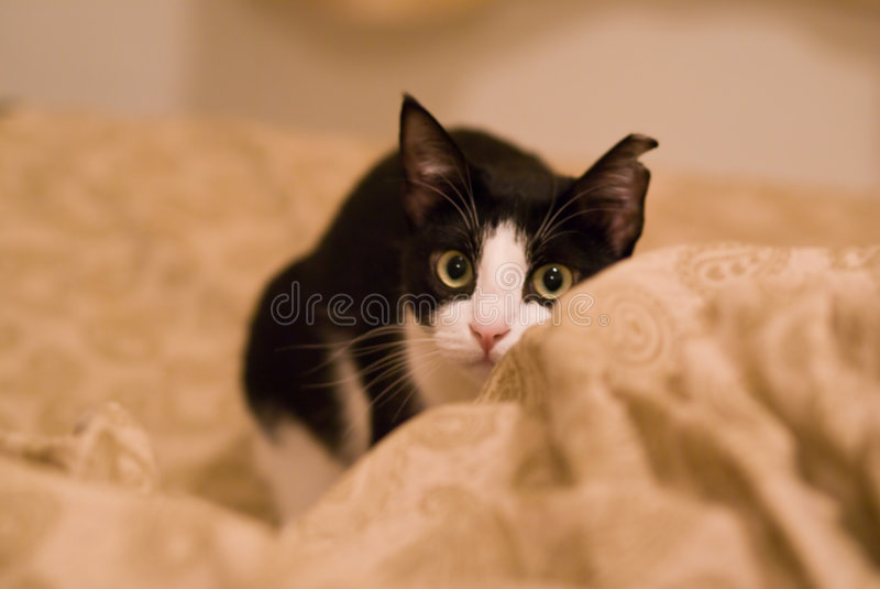 Download кот милый стоковое изображение. изображение насчитывающей gaze - 6863549