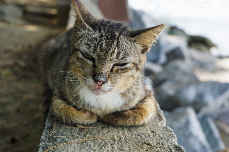 кот милый наслаждающся его жизнью стоковая фотография rf