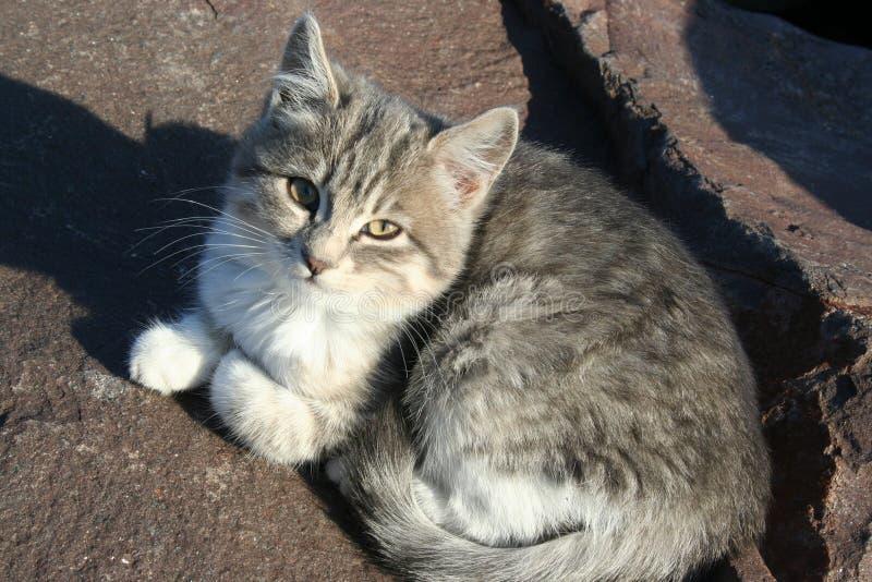 кот милый немногая стоковые фото