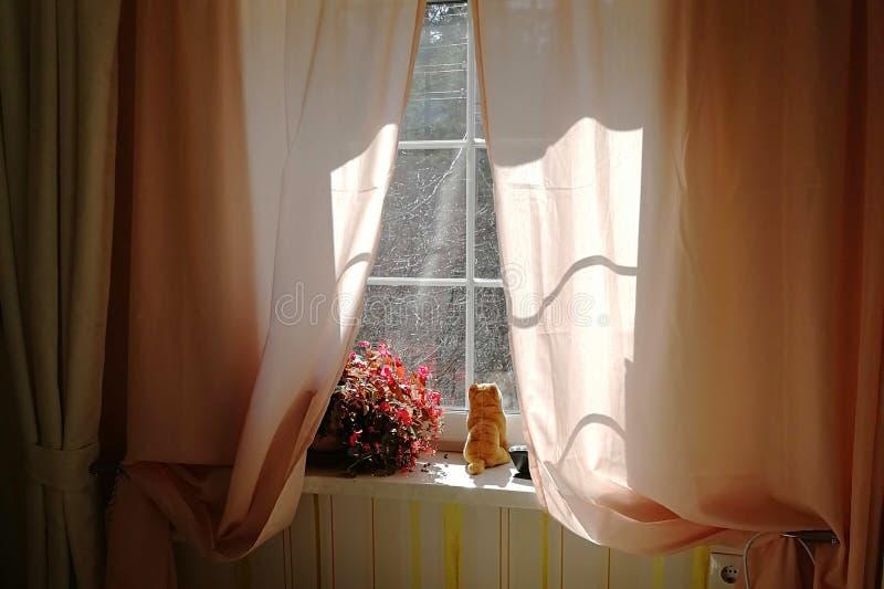 Кот мягкой игрушки красный сидит на windowsill и смотрит вне окно Как весна  стоковые изображения rf