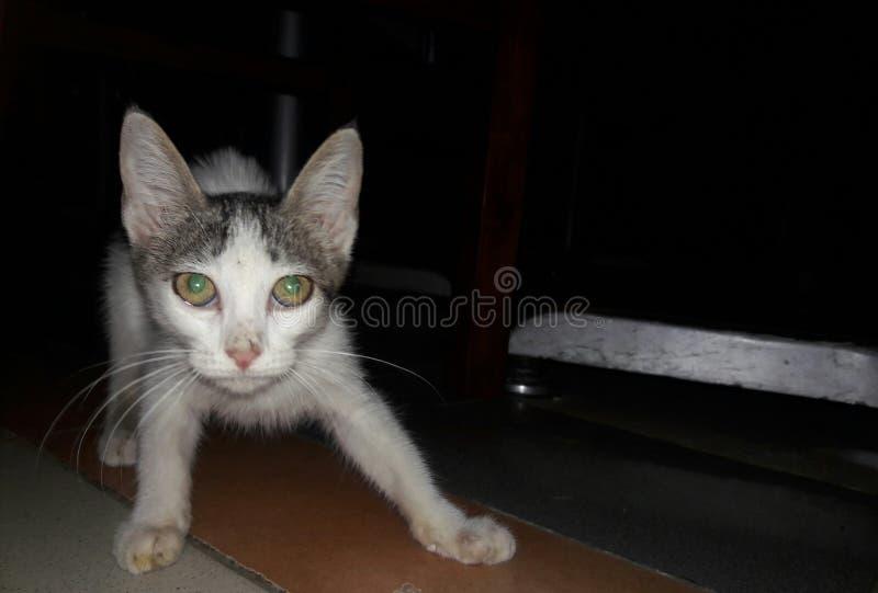 Кот младенца стоковая фотография