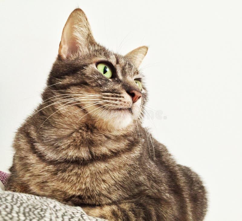 Кот наблюдает снаружи стоковая фотография