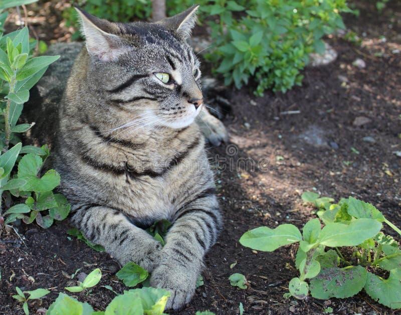 Кот нашивки тигра стоковые изображения