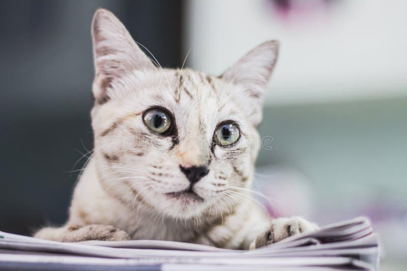 Кот на бумагах новостей стоковая фотография rf