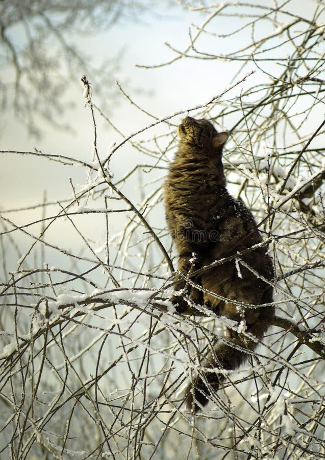Кот на дереве в зиме стоковые фото