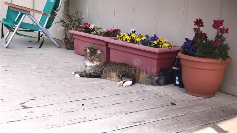 Кот на ее проломе дня стоковые изображения rf