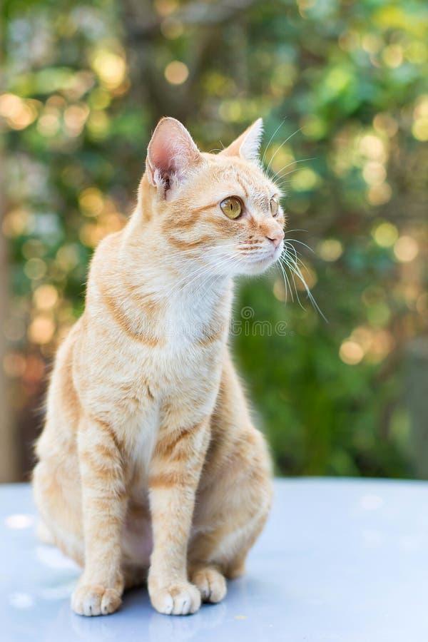 Кот на зеленой предпосылке bokeh стоковое фото rf