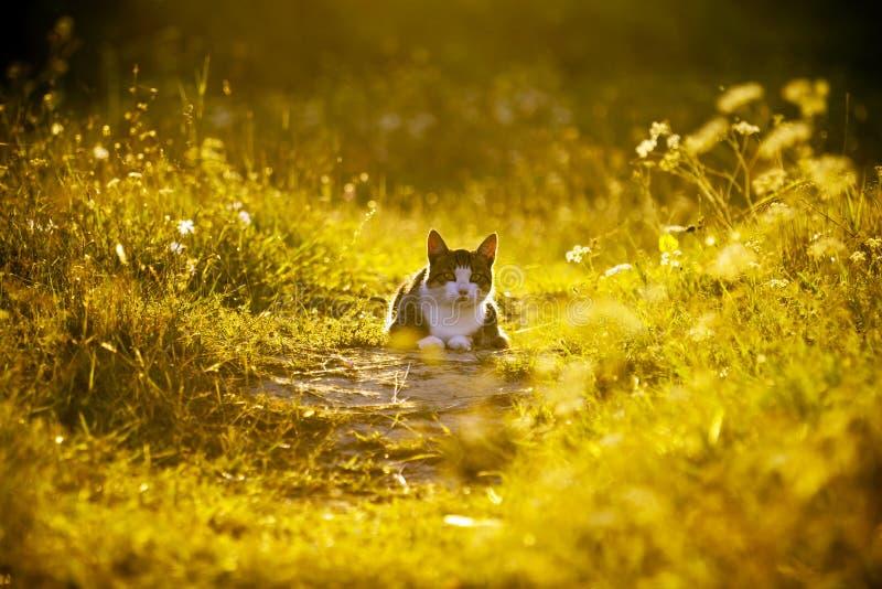 Кот на зеленом луге. стоковое изображение rf