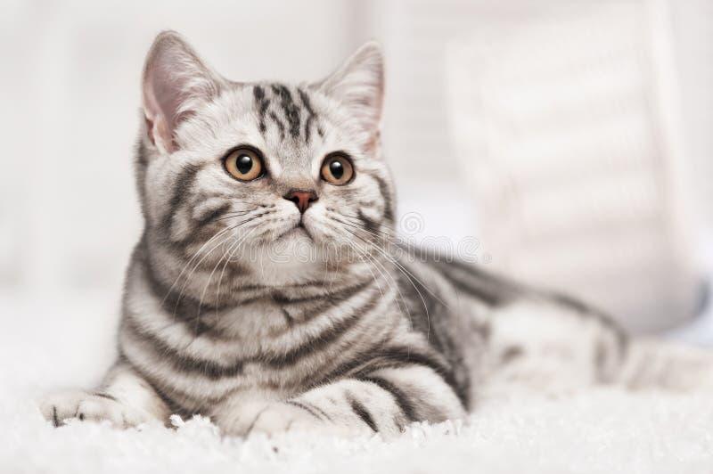 Кот на ковре стоковое изображение
