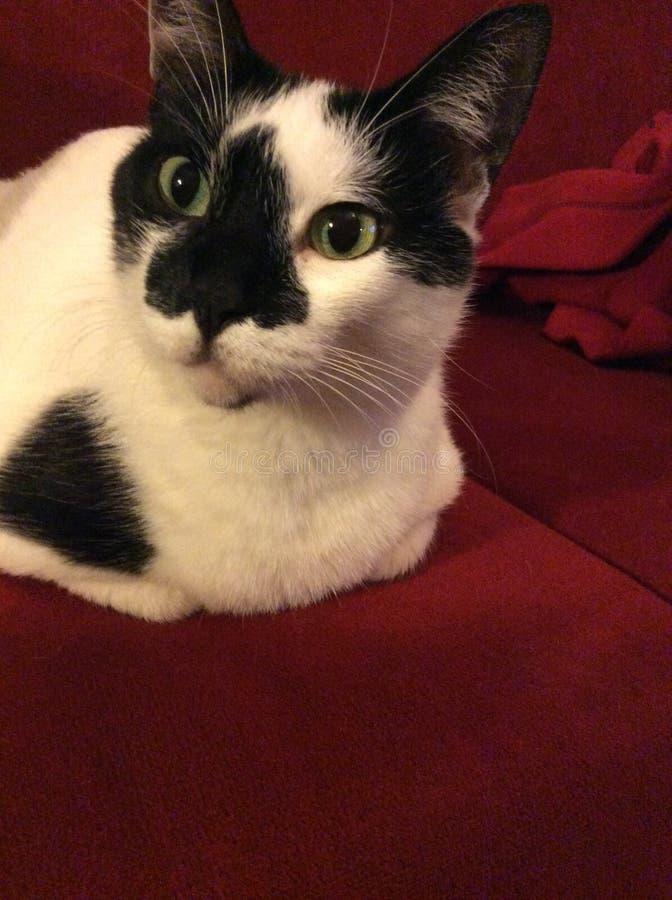 Кот на красной софе стоковые изображения