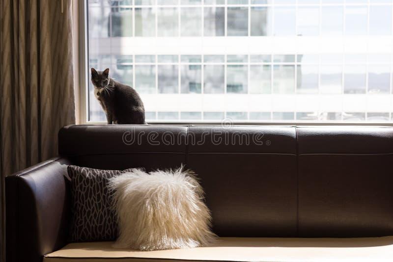 Кот на кресле перед большим окном стоковое фото