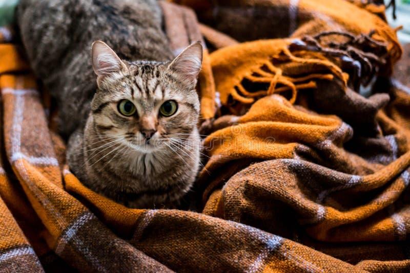 Кот на кровати стоковые фотографии rf
