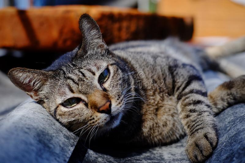 Кот на крыше стоковые фотографии rf